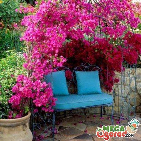 Особенности использования вьющихся растений для сада