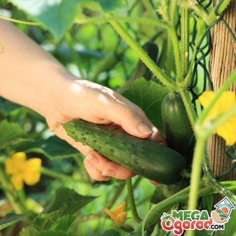 Особенности строения растений и плодов