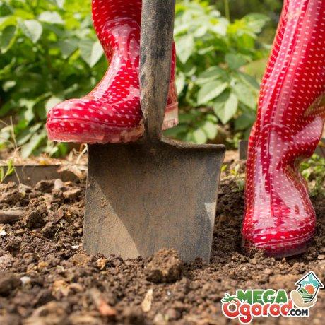 Правильный выбор места для посадки овощей