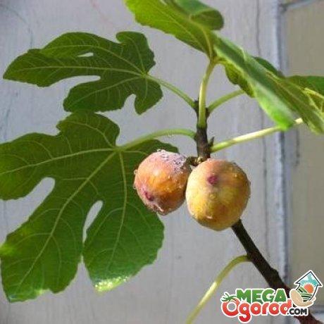 От каких болезней и вредителей нужно оберегать растение