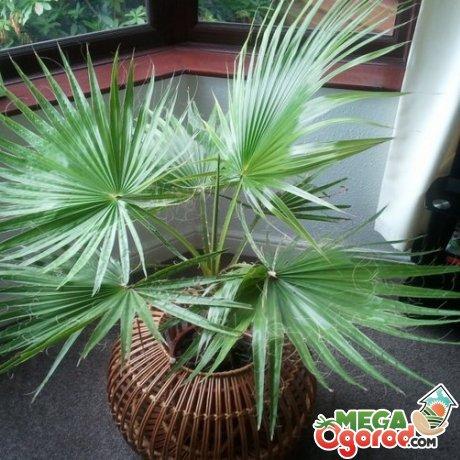 Какие условия нужны для комфортного роста растения