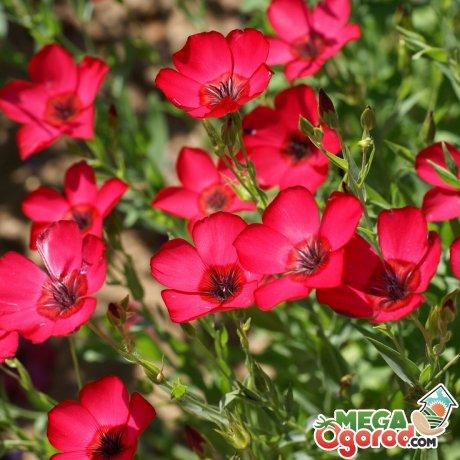 Как ухаживать за цветами разных сортов
