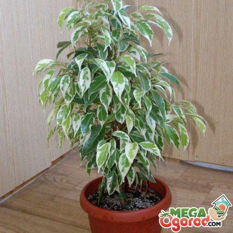 В каких условиях нужно содержать растение