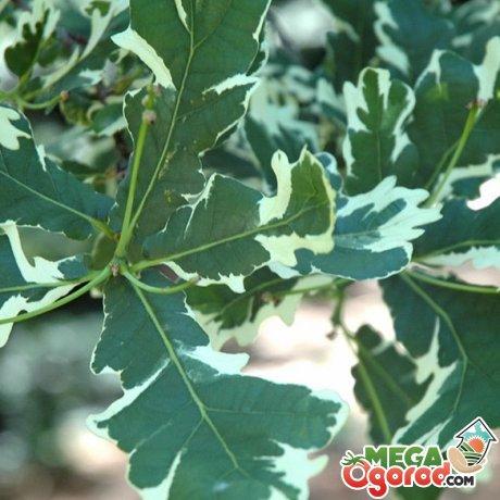 Условия выращивания дерева