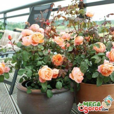 Необходимые условия для выращивания цветка