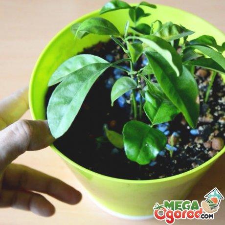 Советы по уходу за комнатным растением