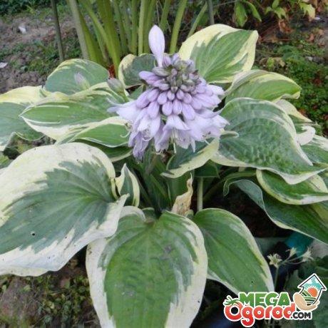 Выбор растений для глубокой тени