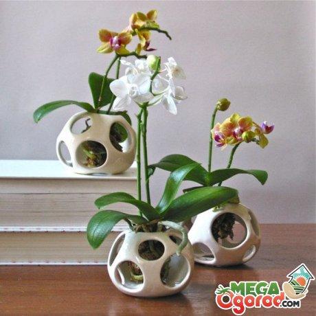 Способы выращивания орхидей