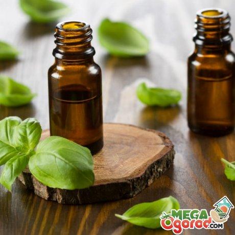 Состав и свойства эфирного масла базилика
