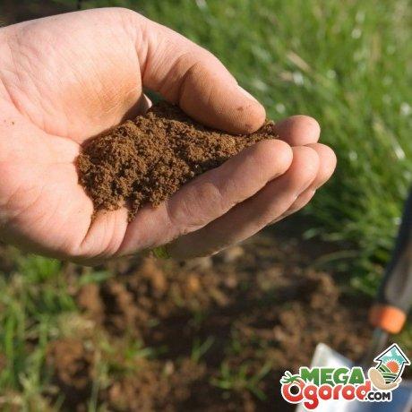Подготовка участка, почвы и саженца