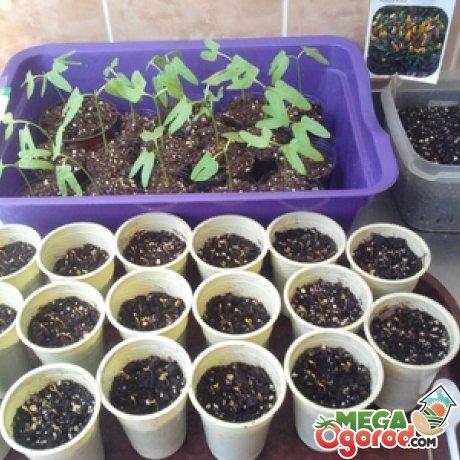 Размножение и выращивание
