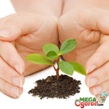 Янтарная кислота применение для растений