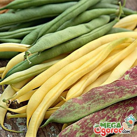 Выбираем лучшие сорта для выращивания