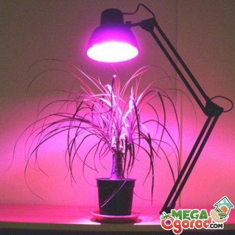 расстояние от лампы до растений для днат