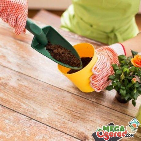 Пересаживаем комнатные растения только в благоприятные дни