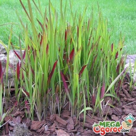 Как размножать и пересаживать растение