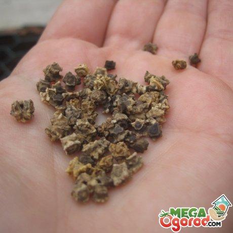 Подготовка семян и грунта к посадке овоща