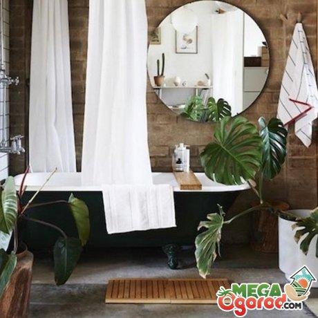 Правильное размещение комнатных цветов в ванной комнате без окон