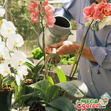 Что делать, как правильно ухаживать за цветком?