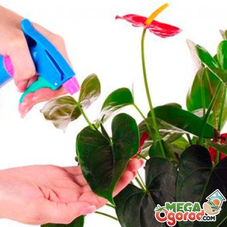 Как правильно ухаживать за цветком?
