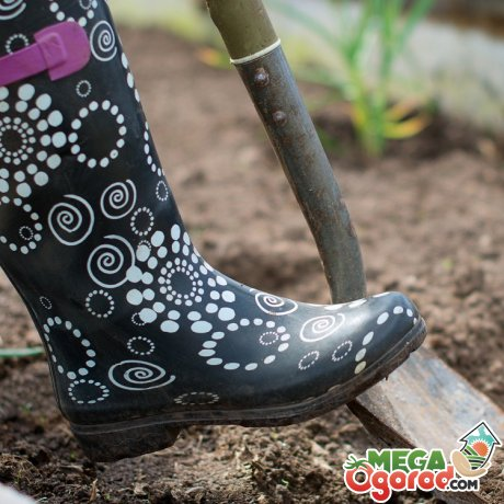 Подготовка почвы и клубней картофеля к посадке