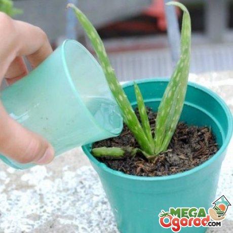Рекомендации по дальнейшему уходу за растением