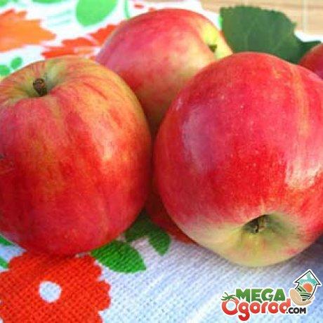 Лучшие сорта яблонь для Подмосковья: особенности выращивания