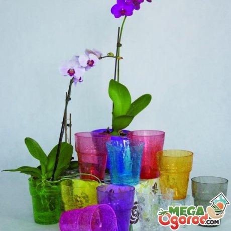 Правила выбора емкости для орхидеи
