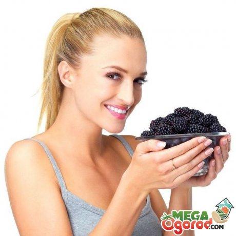 Состав и свойства ягод ежевики