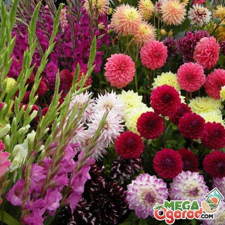 Общие рекомендации по созданию непрерывно цветущей клумбы