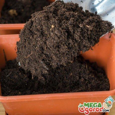 Подготовка посуды и почвы