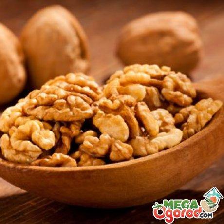 как правильно выбрать орехи