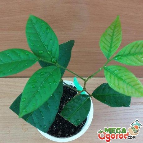 Рекомендации по уходу за растением