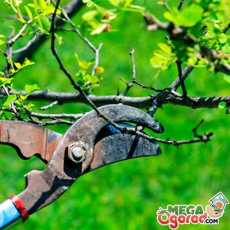 Обрезать дерево весной или осенью?