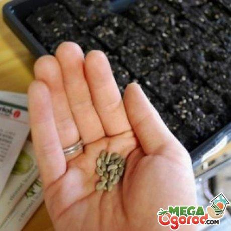 Способы посадки семян клубники