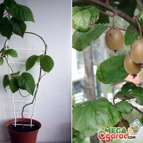 Важные условия хорошего урожая