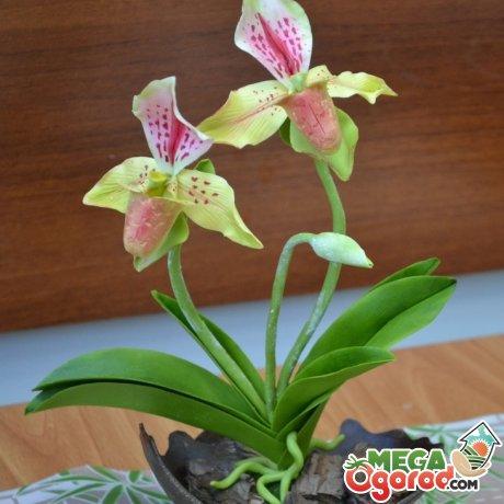 Уход за орхидеей венерин башмачок