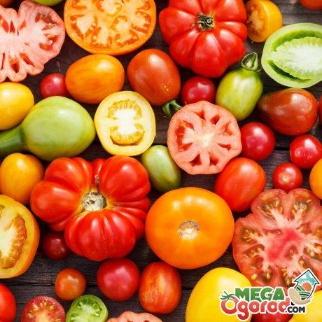 Популярные сорта томатов для выращивания