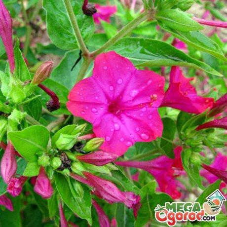 Общая информация о цветке