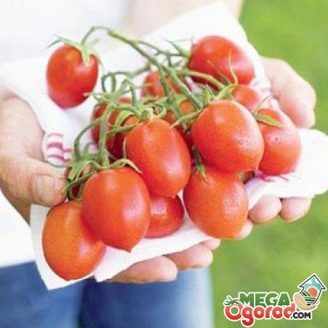 Лучшие сорта томатов для разведения