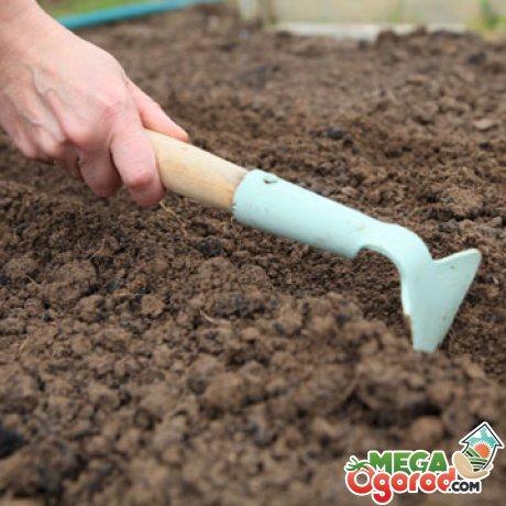 Подготовка почвы, семян и посадка