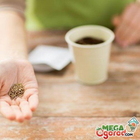 Советы по посадке семян