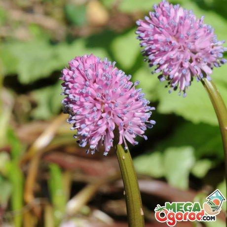 Полезные свойства растения, применение в медицине