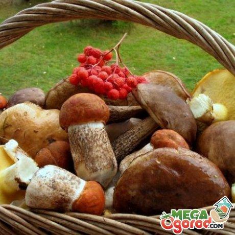 Какие грибы можно выращивать на даче