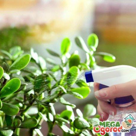 как грамотно ухаживать за растением