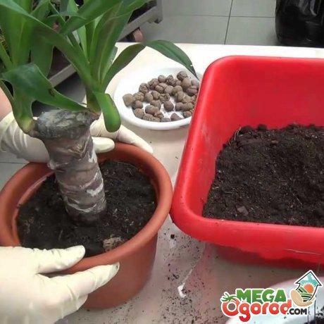 Что делать, как спасти растение?
