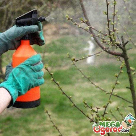 Как и чем лечить деревья?
