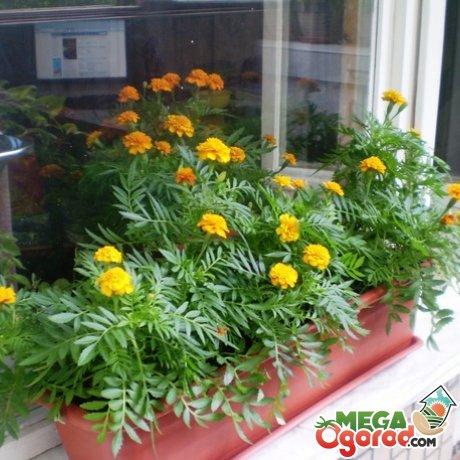 Уход за цветами в домашних условиях
