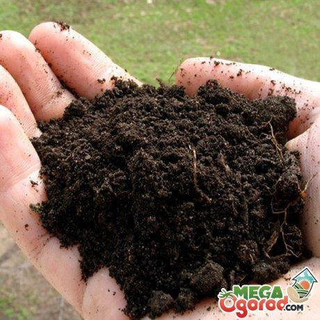 Выбор места и почвы для выращивания