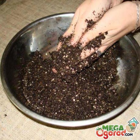 Почва и емкость для цветка